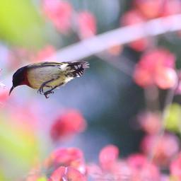 sunbirds birdsphotography