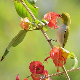 birdsphotography birdslover