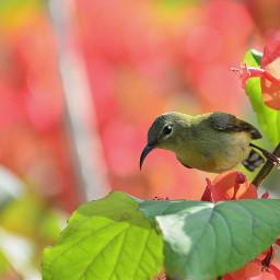 birdsphotography birdphotography bird birdlove