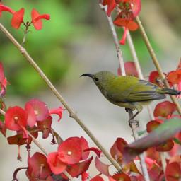 birdsphotography