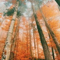 freetoedit nature forest tree pcnaturethroughmyeyes naturethroughmyeyes