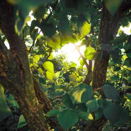 freetoedit pcnaturethroughmyeyes naturethroughmyeyes