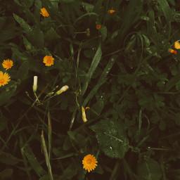 rain photography photostory photo picoftoday naturephotography nature flowers water freetoedit