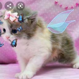 freetoedit bluebutterflies