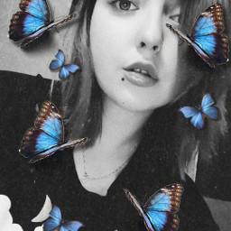 butterfly bluebutterfly freetoedit srcbluebutterflies bluebutterflies
