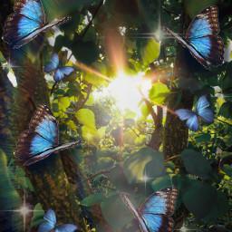 nature butterflies freetoedit srcbluebutterflies bluebutterflies