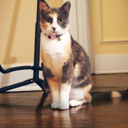 cat catsofpicsart catgirl gato gatalinda