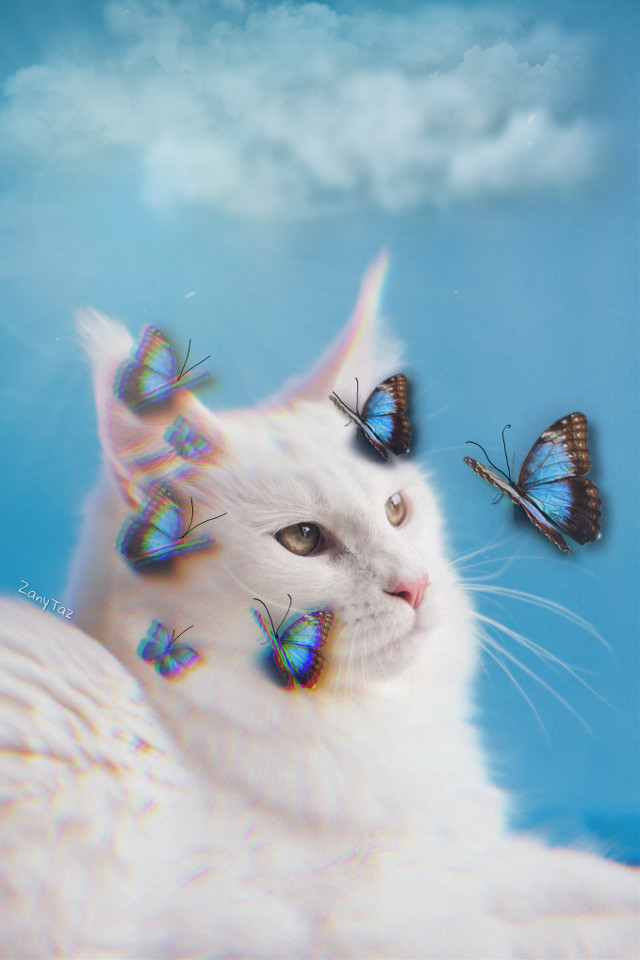 BLUE BUTTERFLIES 🔹 💙🔹 #blue #white #cat #myedit #stickers #freetoedit  #srcbluebutterflies #bluebutterflies