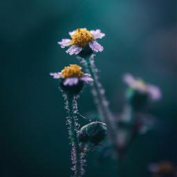 littleflowers flowers macro photography nature naturelover almostspring january freetoedit