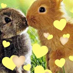 freetoedit srcyellowhearts yellowhearts