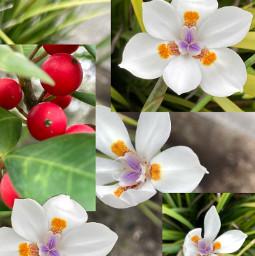 flowers golf berries art interesting photography purple red green yellow orange white photo iphone se bytanakay tanakay bytanakayyt tanakayyt