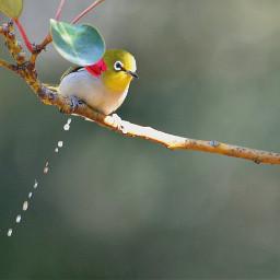 birdsphotography birds