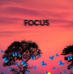 cool butterfly peace freetoedit