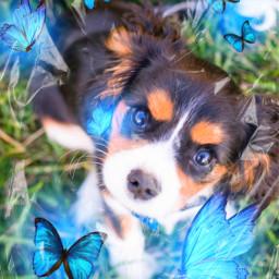 freetoedit animals dog srcbluebutterflies bluebutterflies