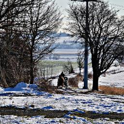 buggy snow horse