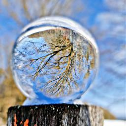 lensballphotography lensball tree