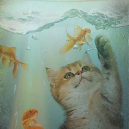cat kitten kitty goldfish fish fishbowl water underwater freetoedit