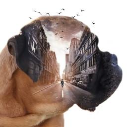 freetoedit doubleexposure mydog