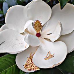 nature flower beautiful freetoedit