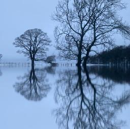 reflection trees snow