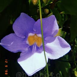 freetoedit photography huphoto flower huji