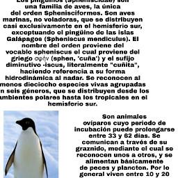 pingüino freetoedit