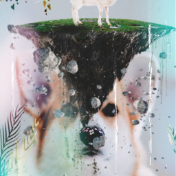 dog animal sheep fly freedom lights nature safe freetoedit