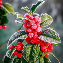 photography colorful morningwalk nature frost