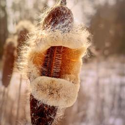 freetoedit winter nature meadow