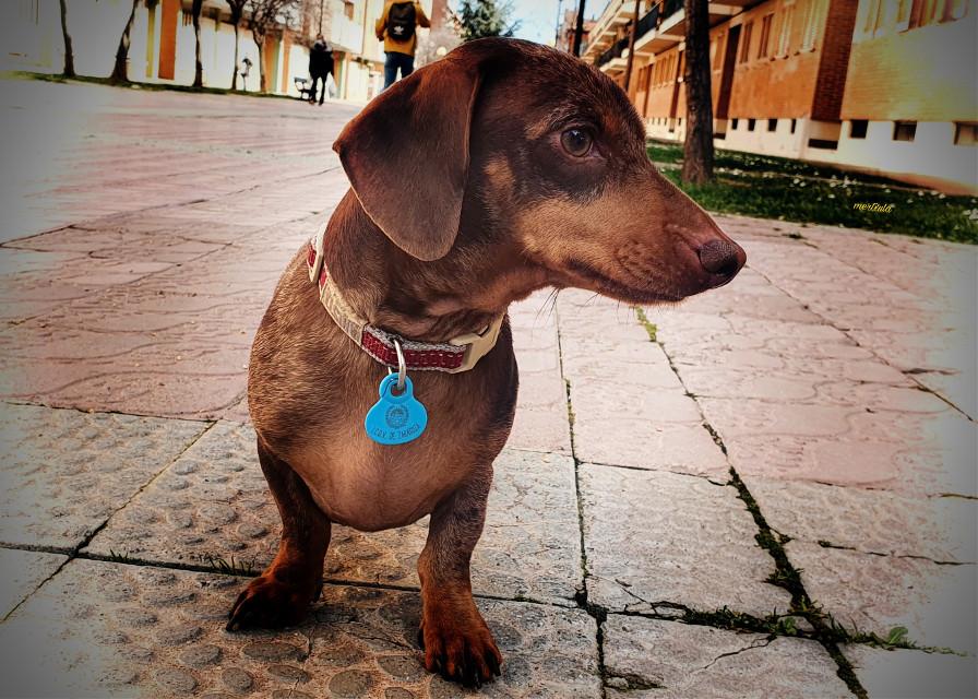 OLIVIA #perros #picsartpets