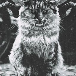 demoncat misothecat wtf devilcat