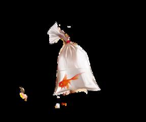 fish goldfish fishinbag nemo nemoinbag darl disney disneypixar disneypixarnemo interesting beach ocean followforfollow addisonrae charlidamelio photography sea nature art amongus idol popular heypicsart myedit editbyme freetoedit