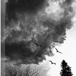 stormclouds blackandwhite birds freetoedit