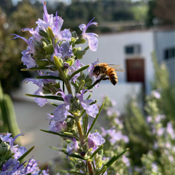 freetoedit flowers nature bee