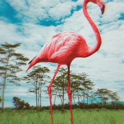 giantanimals pinkflamingo nature freetoedit
