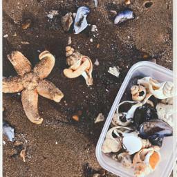 freetoedit starfish beach
