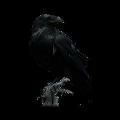 crow freetoedit