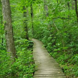 bridge trees woodswalking hiking nature freetoedit pcdreamdestination dreamdestination