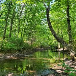 water trees woods hiking nature hikingadventures hikinginthewoods freetoedit pcdreamdestination dreamdestination