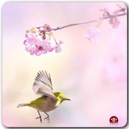freetoedit ig_cameras_united icu_japan