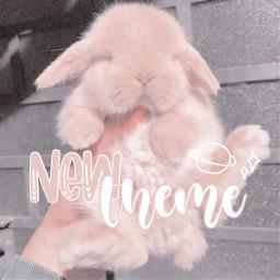 newtheme bunny