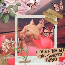dubravka_m dubravka_m_art photography honor20lite replay cat freetoedit rcgentlevibes gentlevibes