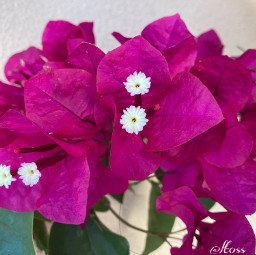 flowershoutout flower flowers nature template freetoedit
