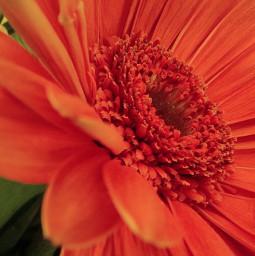 naturephotography flowerphotography flowerpower