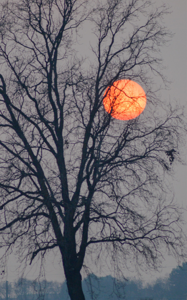 SO SAD FOR MY FRIEND ROBERT @rfg99pics #photography #sunset #silhouette #tree
