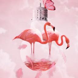 pink flamingo pinkflamingo pinkaesthetic butterfly pinkbutterflies pinktiktok tiktok charlidamelio addisonrae tiktoker tiktokers tiktokqueen blackpink mamamoo kard hwasa ryujin itzy hyuna harrypotter harrystyles forever fanartofkai pcbeautifulbirthmarks freetoedit irclightbulb lightbulb