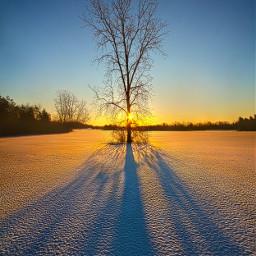 freetoedit remixit nature peace follow followme followforfollow followmeplease beauty pretty landscape beautiful fanart winter tree shadows