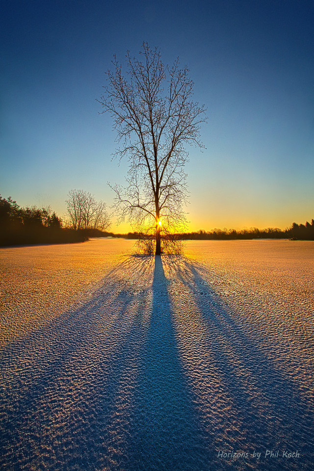 """ One Tree "" - Wisconsin Horizons by Phil Koch. Turning natural landscapes into portraits of nature. #freetoedit #remixit #nature #peace #follow #followme #followforfollow #followmeplease #beauty #pretty #landscape #beautiful #fanart #winter #tree #shadows"