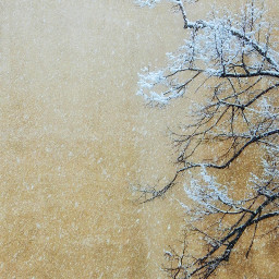 myphotography nature tree trees snow background photography freetoedit