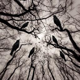 freetoedit remixit remixedwithpicsart birds